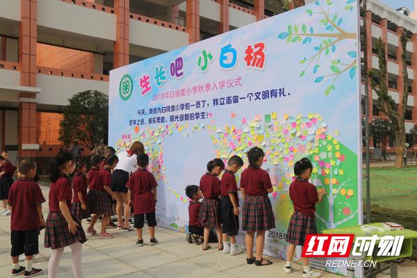开课吧,小教材--白杨坡历史白杨第一课成长小学v教材小学英语图片