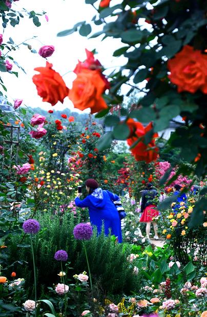 春末的长沙,玫瑰在这里织了一片魔境