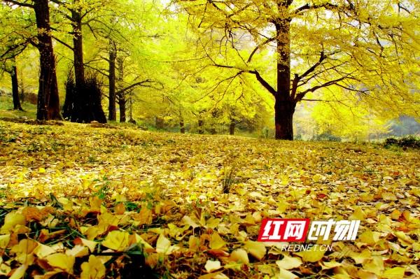 秋天即将上线!这5个地方藏着湖南最美秋色