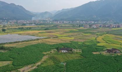 蓝山:丰收的田野