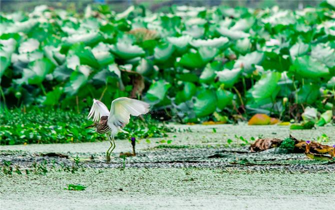 红图丨南来北往的鸟儿 都爱长沙这片最美湿地