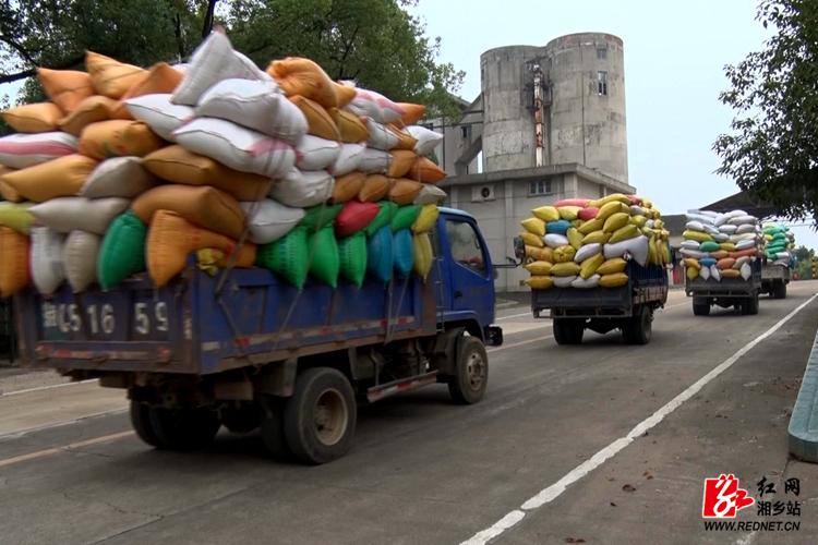 粮库迎收购高峰 五千多吨粮食已入库