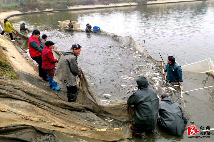 脱贫攻坚一线 | 贫困户万余公斤鲜鱼滞销后续:爱心人士一天帮销近4000斤