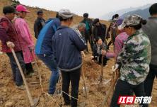 青坪镇开展易地扶贫搬迁后续产业种植技术培训
