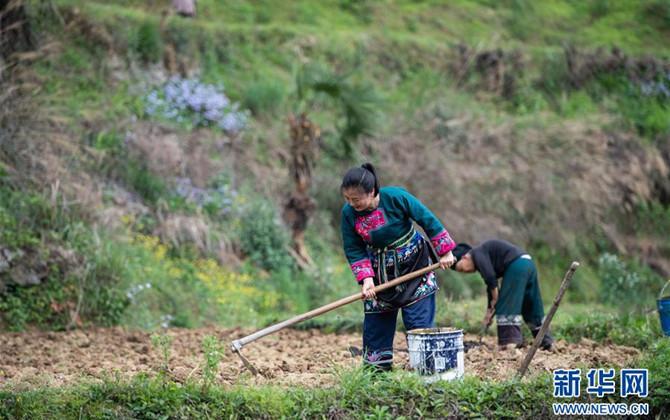 湖南:十八洞村里春耕忙