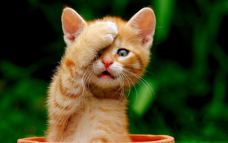 老虎日、爱猫日......看看那些你不知道的节日