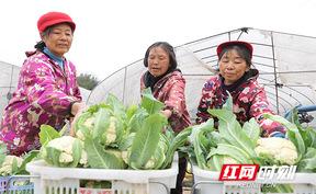 衡阳:蔬菜上新了!请查收