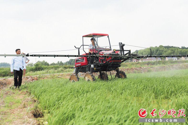90后长沙小伙大学毕业后回乡务农 4年时间成浏阳最大种稻户
