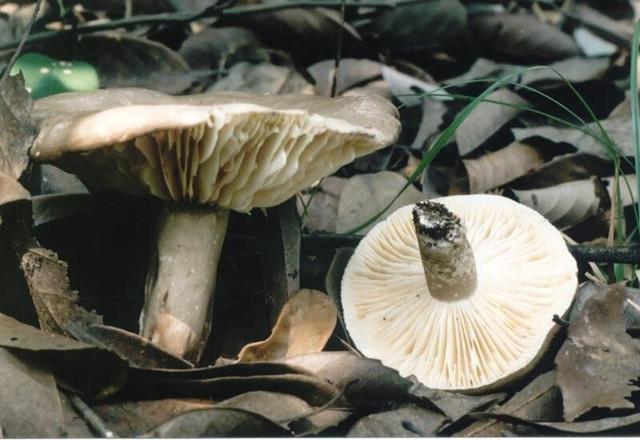 长沙进入蘑菇中毒高发季节 野蘑菇别乱采!