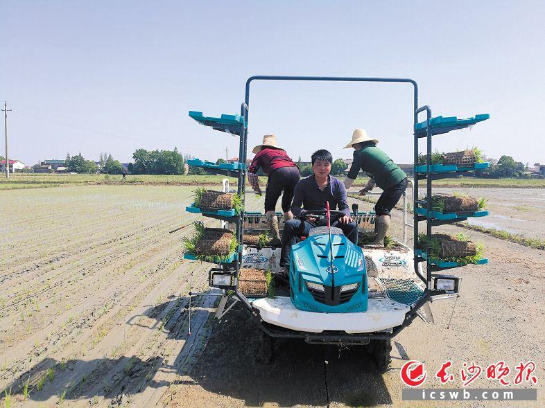 望城成立长沙首家农机综合服务超市 网上下单农机手上门耕田收割