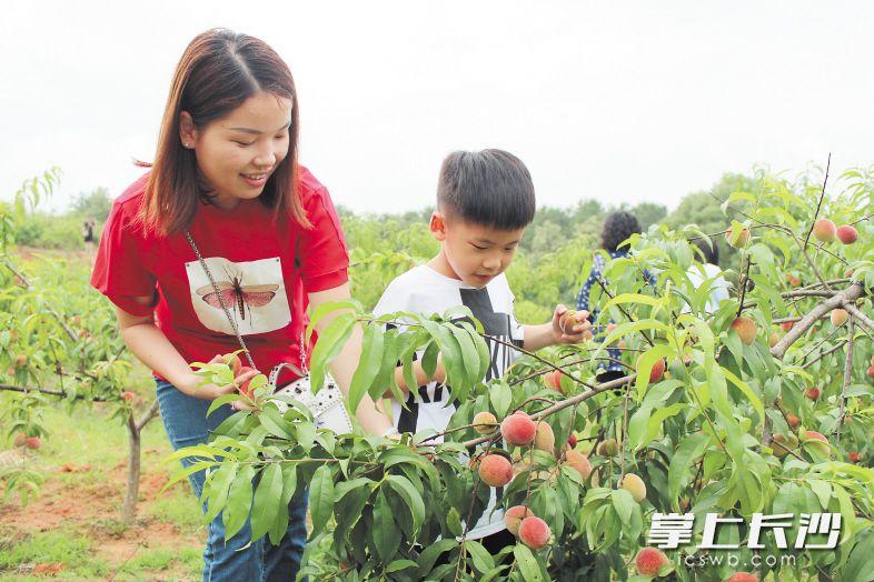 长沙县首届小水果文化旅游节在开慧镇开幕 将持续至10月
