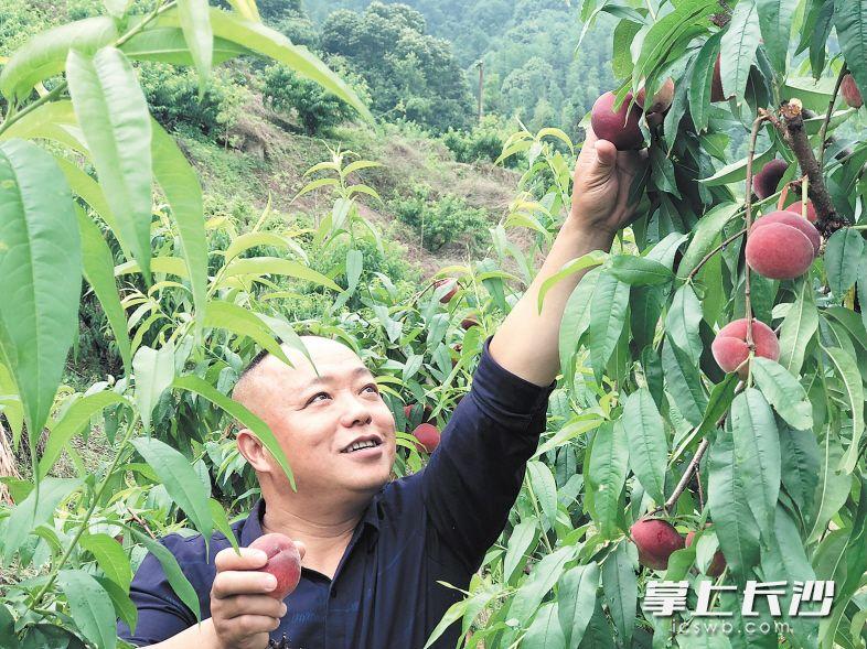 杨梅、蓝莓、樱桃等长沙产时鲜水果进入采摘旺季