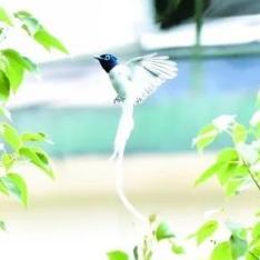 """珍稀鸟类""""一枝花""""现身益阳城区,快来一睹芳容"""