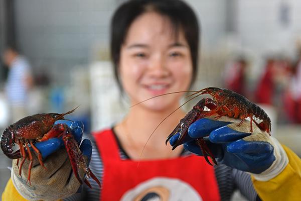 南县小龙虾首次出口俄罗斯 货值2133.5美元