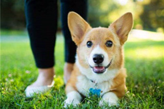养狗有规定!长沙市养犬管理条例(草案)公布 公开征求意见