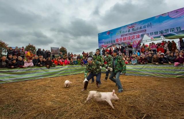 趣味抢猪(民俗民风之美)