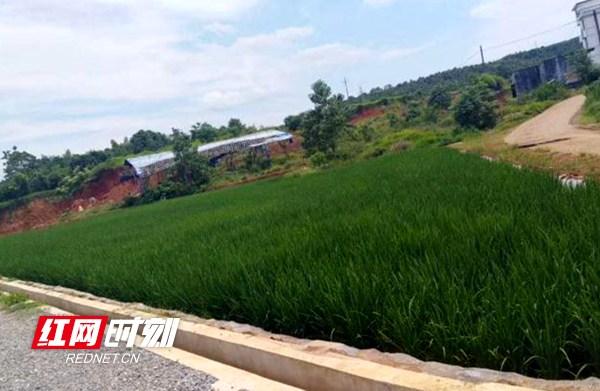 邵阳县增减挂钩项目新增土地1480亩