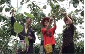 黄岩大坪村特色农产品收入越来越高