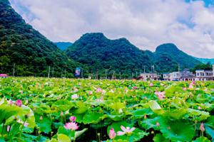 宁远举办第二届荷花旅游文化节