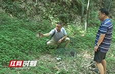 洪江市林业局放生三只国家二级保护野生动物