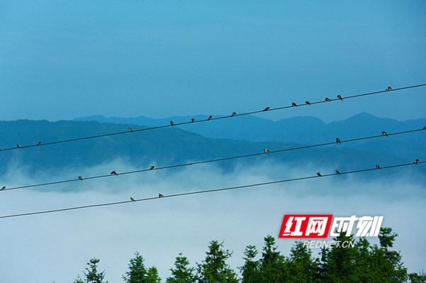 清晨鸟儿在电线上奏乐。