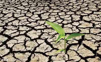 长沙部分地区轻度干旱 受旱面积约9.84万亩
