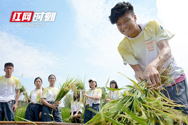 澳门青年做客安江农校纪念园,体验稻作文化感受隆平精神