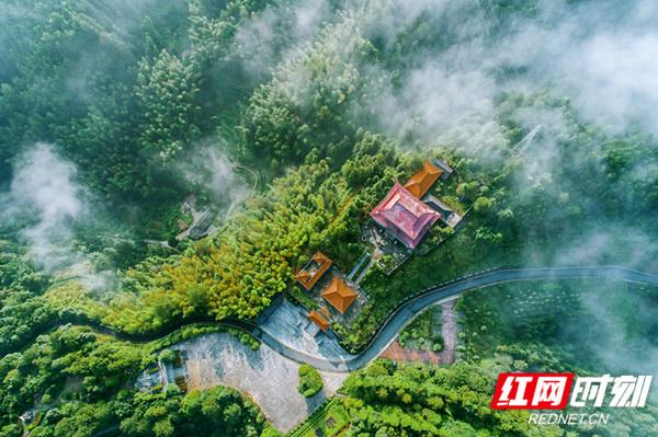 桂东三台山森林公园|雾起林中如同仙境