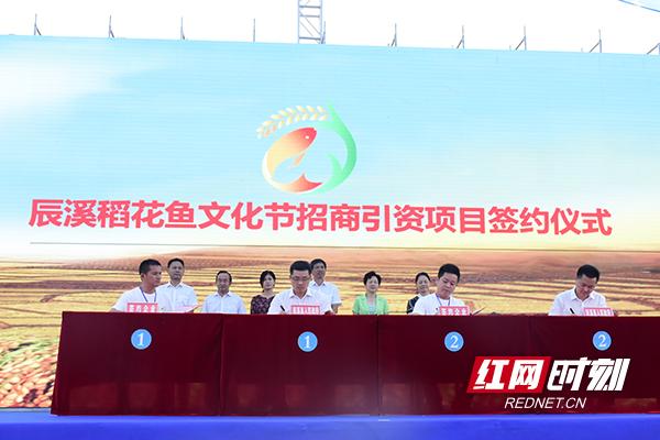 2018中国·辰溪第二届稻花鱼文化节开幕引资16.8亿元