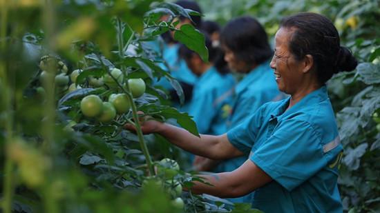 """怀化九丰现代农博园:科技创新领航""""生态+""""经济体系"""