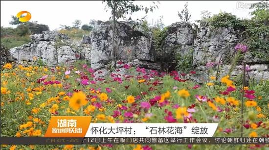 【湖南卫视】怀化大坪村:石林花海绽放