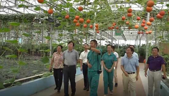 省农业委调研鹤城农产品质量安全工作
