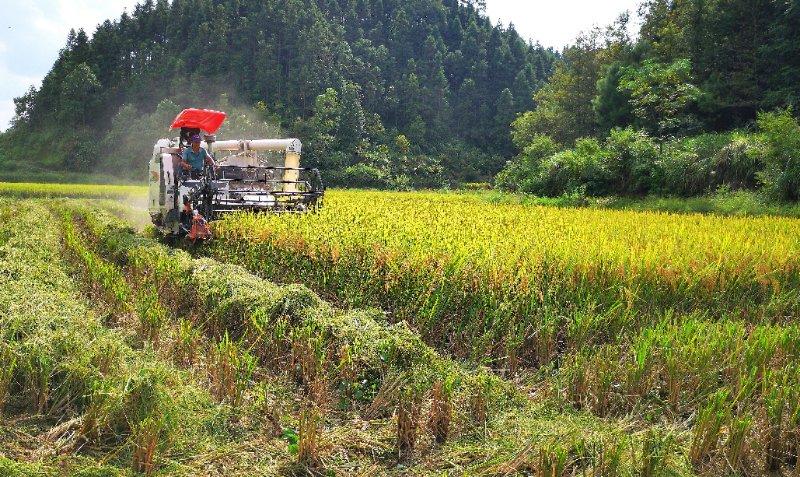 首届农民丰收节|黄金坳镇喜迎丰收季