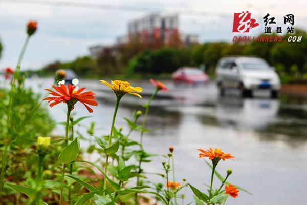目前,該縣城區綠地總面積達到802.7公頃,綠地率35.2%,綠化覆蓋總面積918.8公頃,綠化覆蓋率40.3%,人均公共綠地面積10.1平方米。