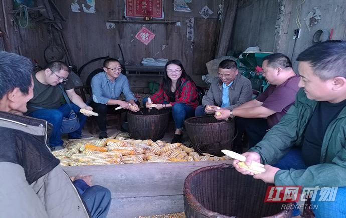 永顺县审计局党员干部为贫困户剥玉米300余斤