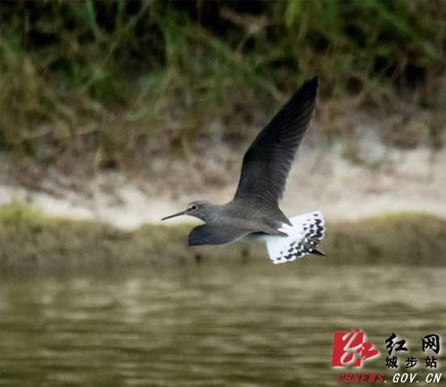 湖南南山国家公园良好生态吸引野生动物频繁造访