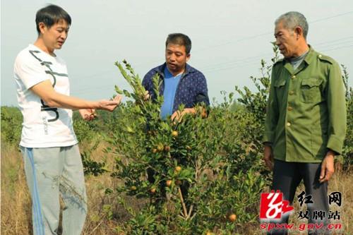 雙牌:移民政策扶持到位 助推朝陽村油茶產業十里飄香