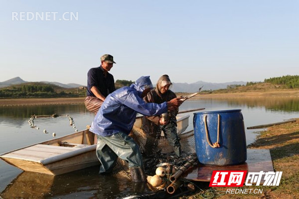 """新田县是""""中国天然富硒农产品之乡""""""""湖南省原生态富硒食品基地县"""",该县种植、养殖的蔬菜、鱼禽畜类产品均有较高的含硒量,农副产品深受消费者青睐,远销港澳国外,供不应求。"""