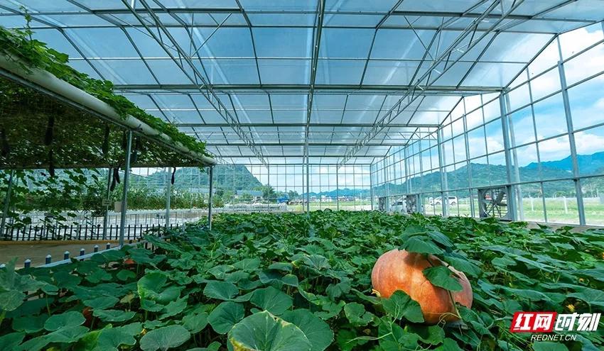 张家界农业观光园新的优惠来袭,快来接收!