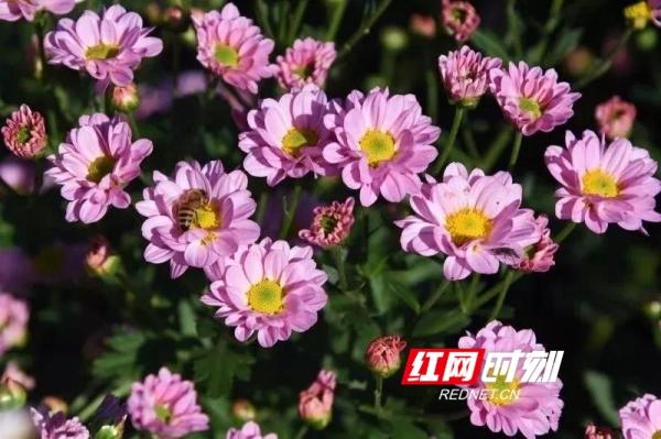 生態紫溪 花好鴛鴦到(組圖)