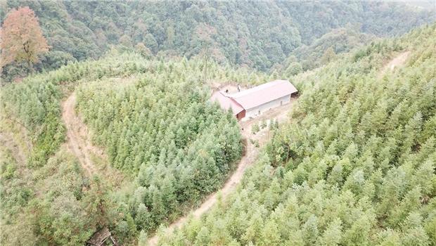 怀化市沅陵县荔溪乡芦洞村1761亩林地使用权及其林木转让