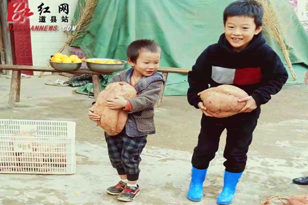 """道县一农民种出重11.2斤的""""巨无霸""""红薯"""