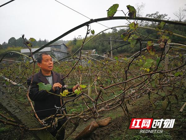 """永兴县上桥村:培育发展脱贫致富""""领头雁"""""""
