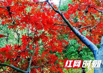 衡阳岳屏广场上的叶子已美得一塌糊涂