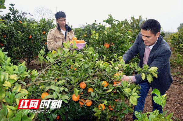 江华山寨村:多业并举奔小康