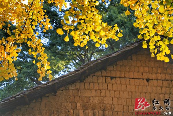 趁着风还未吹尽树梢的银杏叶,带着这童话去银杏树下吧!别错过这时光予我们的馈赠。