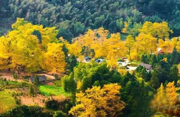 【精准扶贫 乡村振兴】双牌:银杏变身贫困户摇钱树 森林土鸡产值将突破1.5亿元