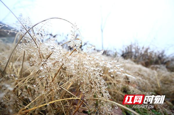 """""""湖南屋脊""""壶瓶山今年第一场覆冰 """"电骡子""""巡查忙"""