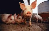 桃源县部署非洲猪瘟疫区解封迎评工作