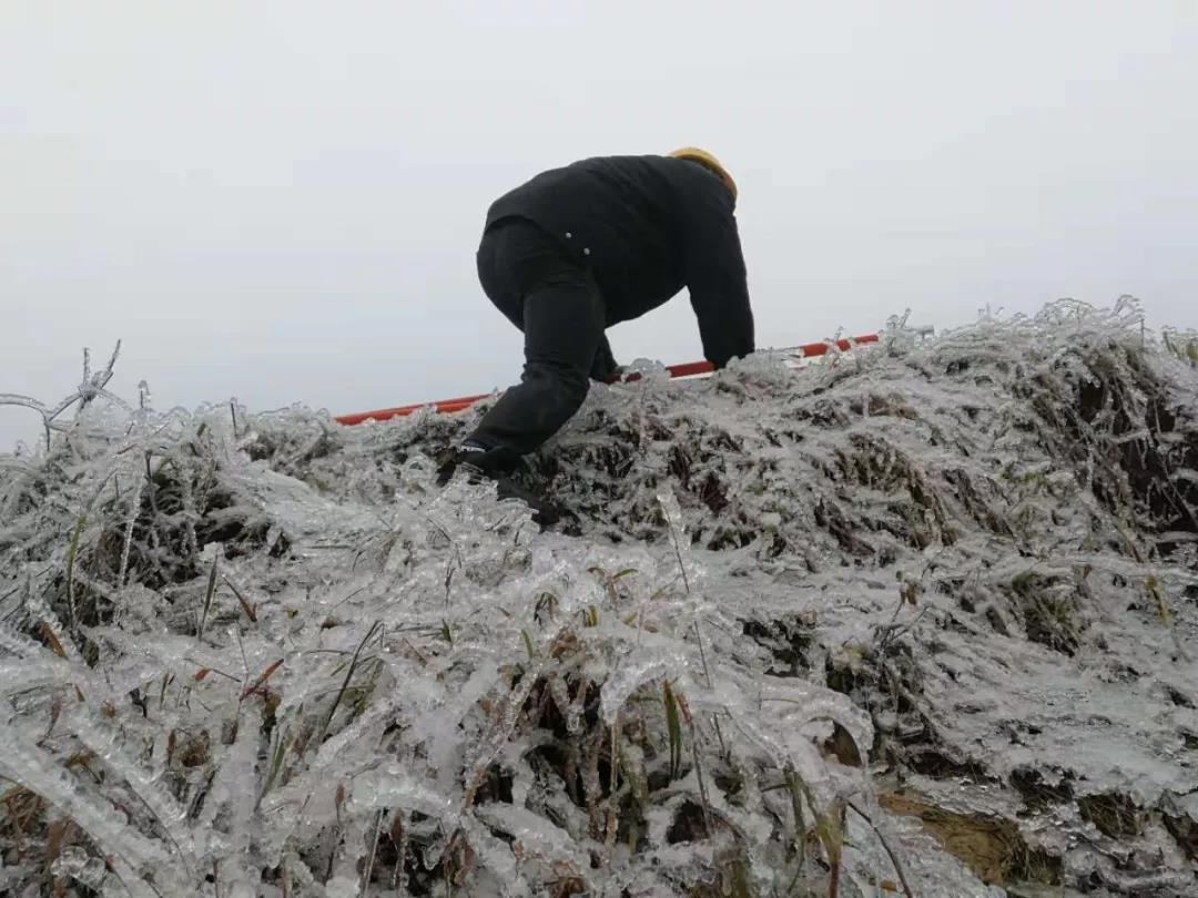 """受低温雨雪天气影响,位于高寒山区的龙庄湾乡被冰雪覆盖。大量竹树覆冰压在主线路及支线,导致整个线路跳闸停电,该乡连续三天出现电力受损情况,间歇性停电给群众生产生活造成了影响。""""群众的需求就是命令。""""龙潭供电所所长刘杰立即组织人员,带领抢修班赶赴现场,连夜清理树障,冒险抢修。"""